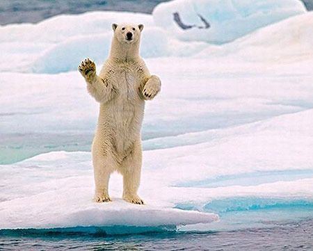 Best Hilarious Animals Images On Pinterest Acting Adorable - 15 funny bears acting like humans