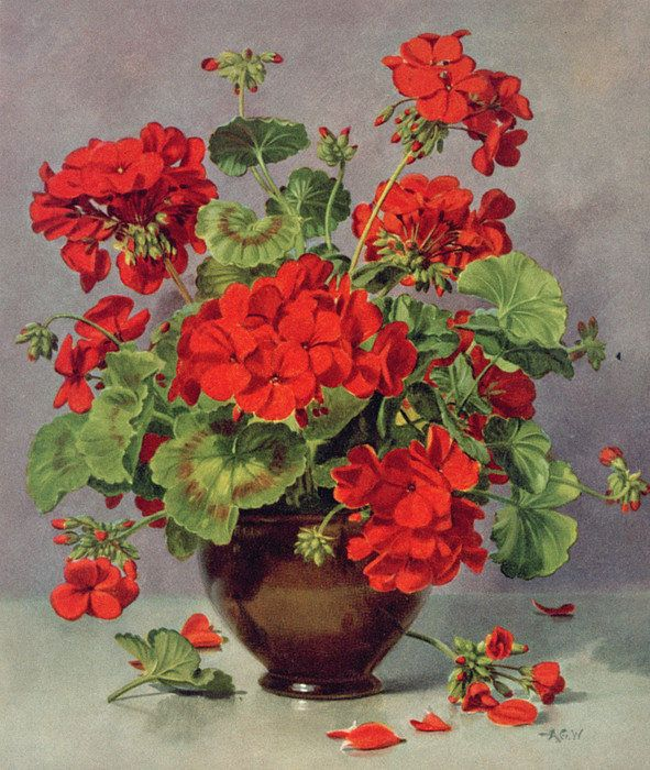 Pb273 Geranium In An Earthenware Vase Print By Albert Williams