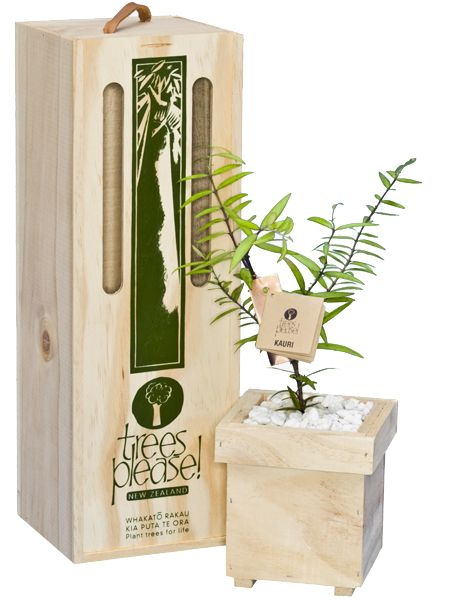 Kauri Tree Gift.  Online gifts delivered within NZ