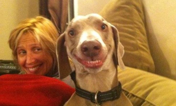 Grinning dog with cartoon smile is internet sensation | Daily Mail Online