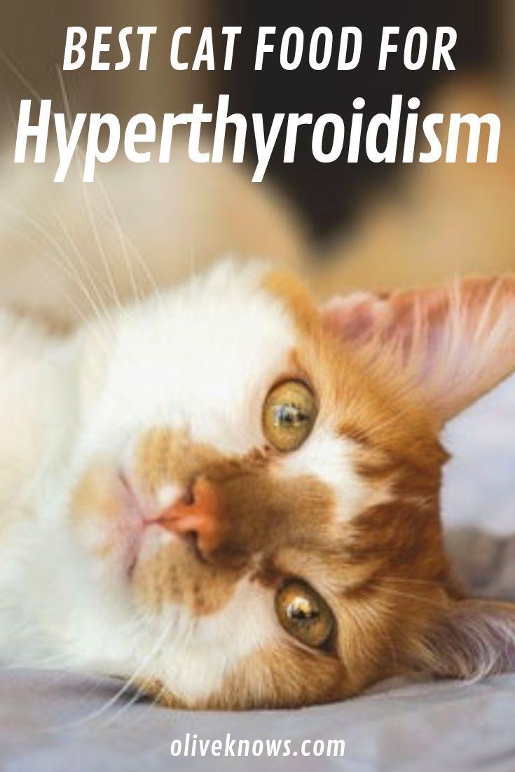 The Best Cat Food For Hyperthyroidism Oliveknows Cats Best Cat Food Cat Food