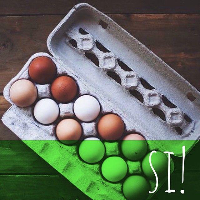 Los huevos son una fuente alimenticia muy completa  Además de proporcionar un alto contenido de proteínas, los huevos vienen cargados con vitamina A, vitamina B12 y hierro, contribuyendo a la buena salud de tu hijo de 4 patas  Puedes dárselos cocidos o crudos. La cáscara del huevo también es un excelente alimento!  #PerroFeliz #chachayelgalgo #pasteleriacanina #paletasparaperros #amorperruno #mascotas #peluditos #perrosaludable #alimentacioncanina #YoCreoEnCali #cali #calico #colombia