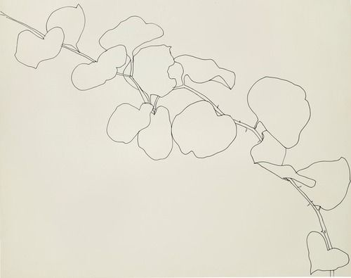 Contour Line Drawing Xbox One : Best ellsworth kelly drawings images on pinterest