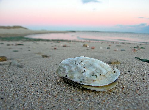 how to become a oyster consultant