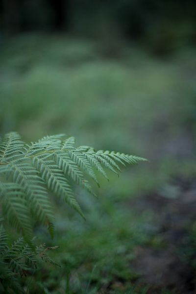 Detail of fern tree in the last lights of the day