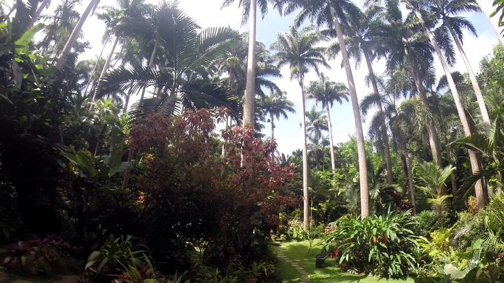 Barbados Mini Moments - the majesty, beauty and tranquility of Hunte's Gardens