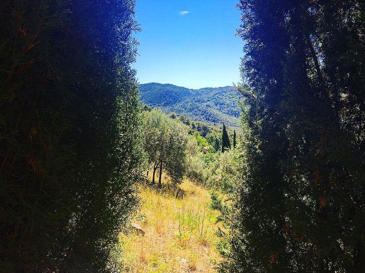 Sunday #nature #mothernature #sky #sun #summer #beauty #light #photooftheday #sun #sunny #sunnyday #sunligh #lookup #warm #hot #beautiful #summertime #vacation #travel #instagood #arbre #branches #color #botanical #sud #lesuddelafrance