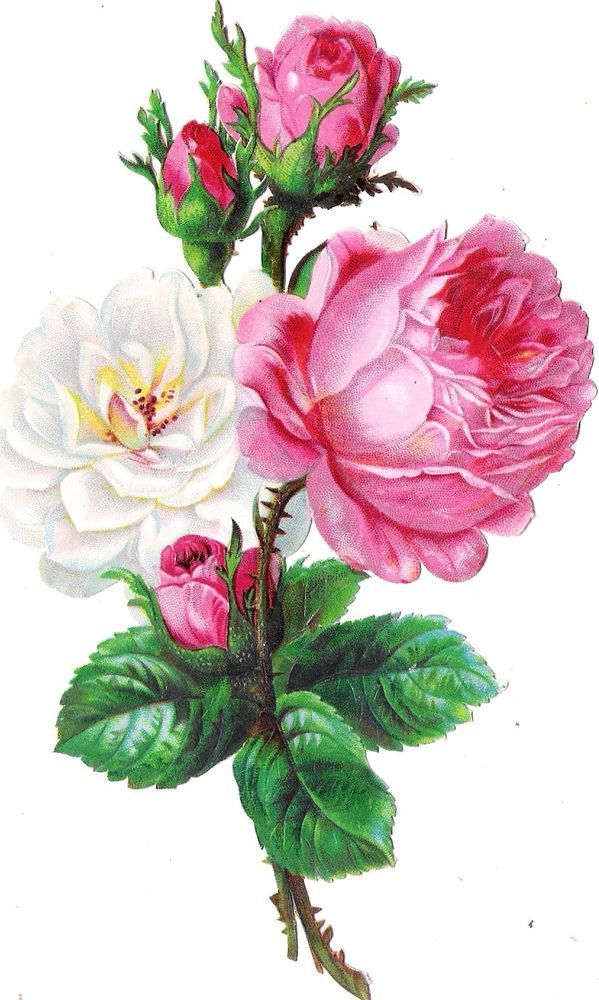 Oblaten Glanzbild scrap die cut chromo Rose XL 18cm  Blume flower