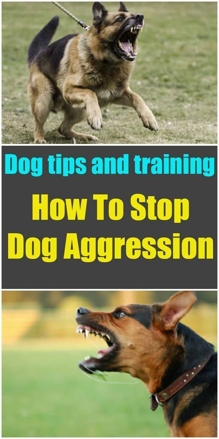 Valuable tips how to stop dog aggression dog training cute