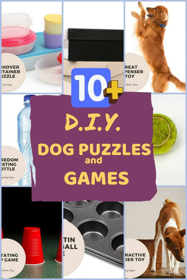 10 Best Diy Dog Puzzle Toys And Games To Make At Home Dog
