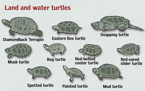 Delaware is home to 15 species of turtles