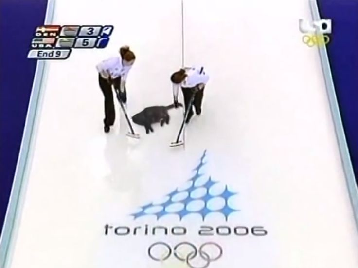 Cat Curling Is A Thing You Need To See.  Further proof that cats make everything better.