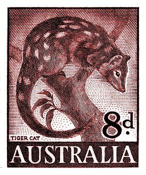 Vintage and beautifully engraved postage stamp issued in 1959 by Australia in a series commemorating native fauna, here depicted is the tiger quoll also known as (erroneously) the tiger cat which is endemic to Australia. tiger quoll,spotted-tail quoll,dasyurus,australia,outback,vintage,postage stamp,fauna,mayo,postal,ephemera,uluru,ayers,wildlife,nature,engraving,native,ozzie,native,endangered species,conservation