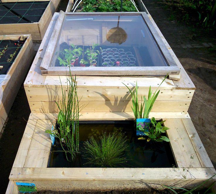 Multifunctional vegetable garden design: my cold frame, miniature pond and raised vegetable bed all in one. Multifunctioneel design voor moestuin: mijn combi van koudekas, mini-vijver en verhoogde groentenbak in één