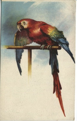 Unknown French Publisher Postcard - Parrot. Perroquet
