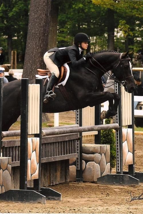 Black Horse Warmblood Sport Horse English Hunter Oxer Jump Natural Wood Log Plants Wagon Wheel