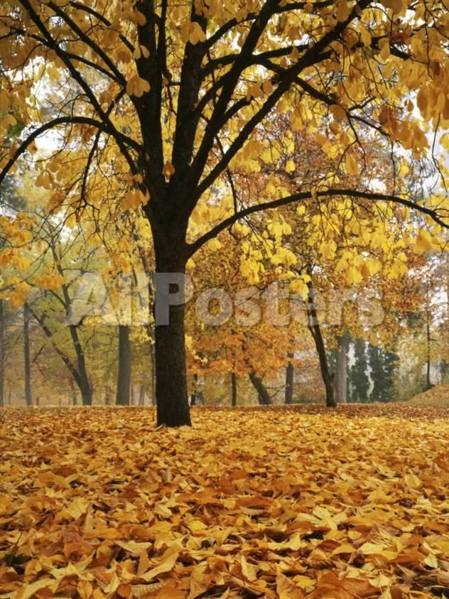 Autumn, Manito Park, Spokane, Washington, USA by blas Landscapes  Photographic Print -