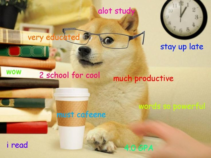 a1199e56544b00b716791a54bb503e16 teachers pet doge meme 25 best wow such doge images on pinterest funny stuff, funny,So Much Wow Meme