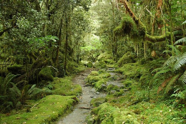 new zealand | New Zealand - Travel Information and Travel Guide