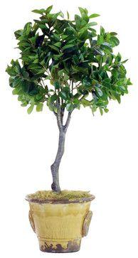 Italian Ficus Topiary In Urn Flower Arrangement - traditional - artificial flowers - Winward Designs