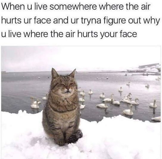 Lol! But the cats eyes are closed because it feels at peace ans not threatenes. It likes the cold and trusts whowver took that picture!