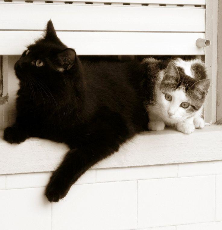 meus gatinhos <3
