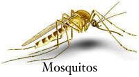 Recipe on this page for repelling mosquitoes without poisonous chemicals. Soy oil and Palmolive dish soap.