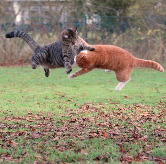 The All Cat version of The Matrix had reached the Agent Smith/Neo fight scene.