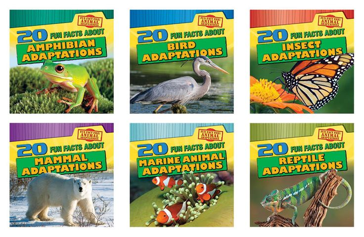 Fun Fact File: Animal Adaptations   Gareth Stevens for 3rd grade PBL--Need to see review first!!!