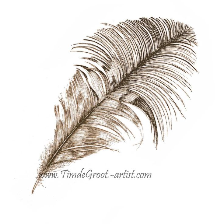 Free Falling 1. Between release and destination is the gentle drift towards groundedness. The transient free fall is a time where past sins can be forgiven and destiny is shrouded in dream. It is the celebration of freedom. Feathers have a links to the spirit world and Free Falling is about putting your faith in destiny. #feather #ink #art #print #wallart #destiny #botanicals