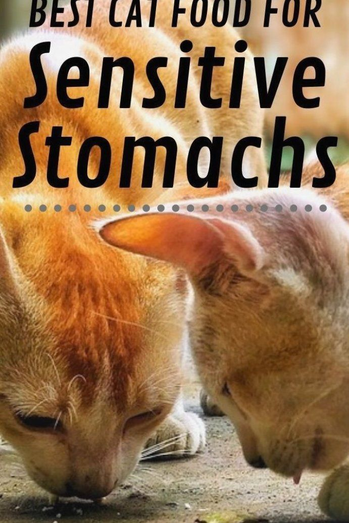 All The Foods Listed In This Article Are A Great Choice To Go With In Case Your Cat Has An Upset Stomach They All Pro In 2020 Best Cat Food Cat