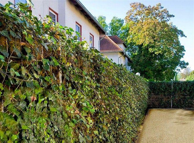 Inspirational L rmschutz HELIX COMPACTA Dachgartensachen Pinterest Sicht Toranlagen und L rmschutz