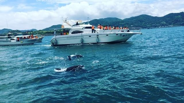 dolphins!! 野生のイルカの群れ🐬😍♥ #dolphins #dolphinwatching #shimabara #sea #nagasaki #cruise #travel #travelgram #japan #長崎 #南島原 #長崎旅行 #イルカ #イルカウォッチング #めっちゃおる #快晴すぎて紫外線アレルギーのおばさん涙目 #つやつやで可愛いよ #鼻息がリアル #나가사키 #나가사키여행 #여해스타그램 #돌고래 #돌고래투어