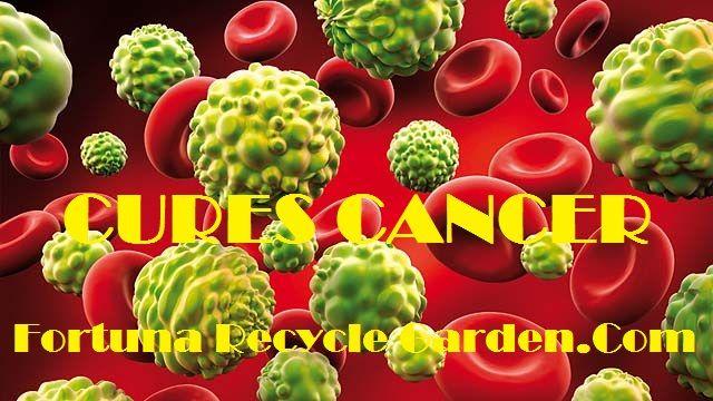 Biji Anggur Sebagai Anti-Cancer Drugs,Informasi Yang Selama Ini Dirahasiakan