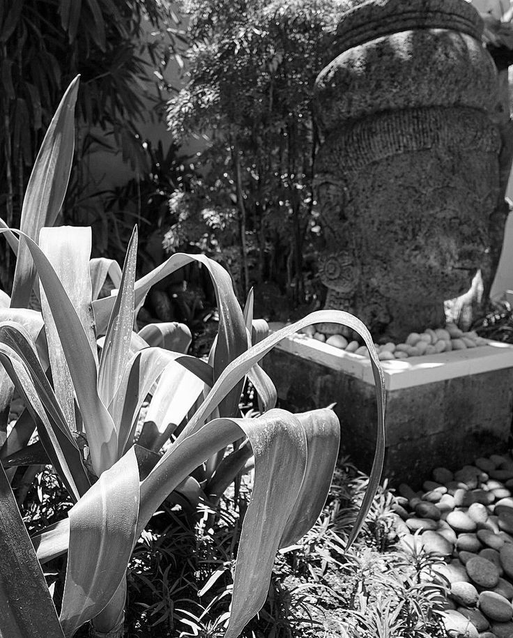 Man made and nature. Finding the right sculpture or man made element will always enhance the softscape and garden design. Private Villa Bali  By Bali Landscape Company  http://ift.tt/1QzTwns  #sculpture #planting #bali #blackandwhite #landscape #landscapedesigner #landscapearchitecture #gardenlovers #taman #tropicaldesign #tropicallandscape  #balilandscaper #landscapecontractor #gardenlovers #tropicallandscape  #landscapearchitect #garden #gardenideas #gardeninspiration #instagarden…