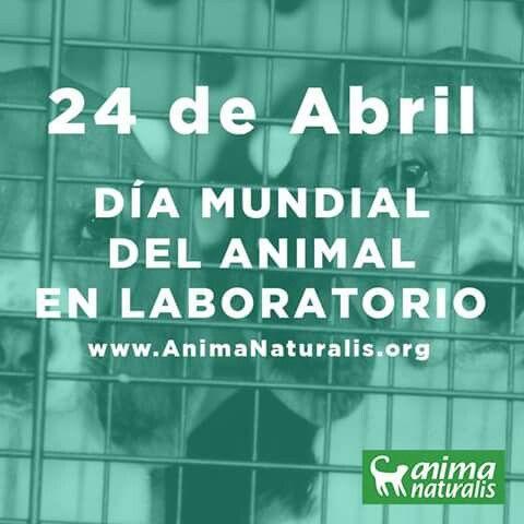 El 24 de abril es el Día Mundial del Animal en Laboratorios. Es un día para crear conciencia, para exigir el fin de las experimentaciones en animales.  ¿Sabías que el tabaco se prueba en animales?   A pesar de que las comisiones de salud saben desde décadas que fumar induce a cáncer de pulmón, enfisema y otras enfermedades, la industria tabacalera, en un intento por encontrar evidencias de lo contrario, sigue realizando dolorosos experimentos en perros, gatos, monos, conejos, pollos, ratas…