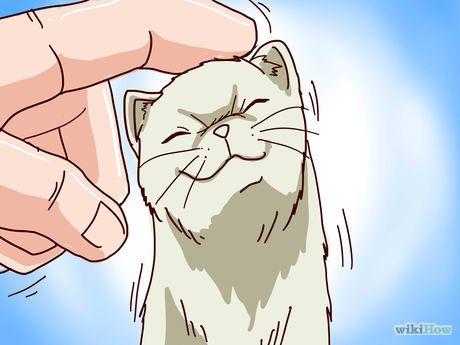 Train Your Ferrets to Do Tricks