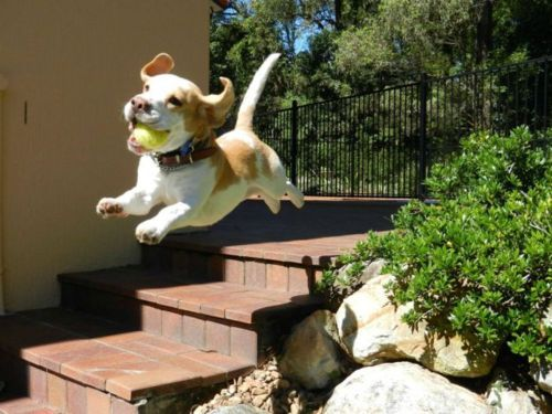 Otis tries to jump like this but he only gets a few inches off the ground.