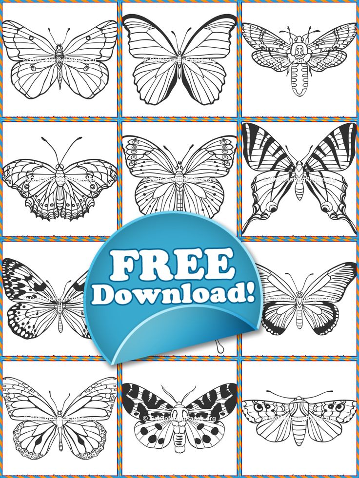 Beautiful Butterflies Coloring Sheets PDF Download ...