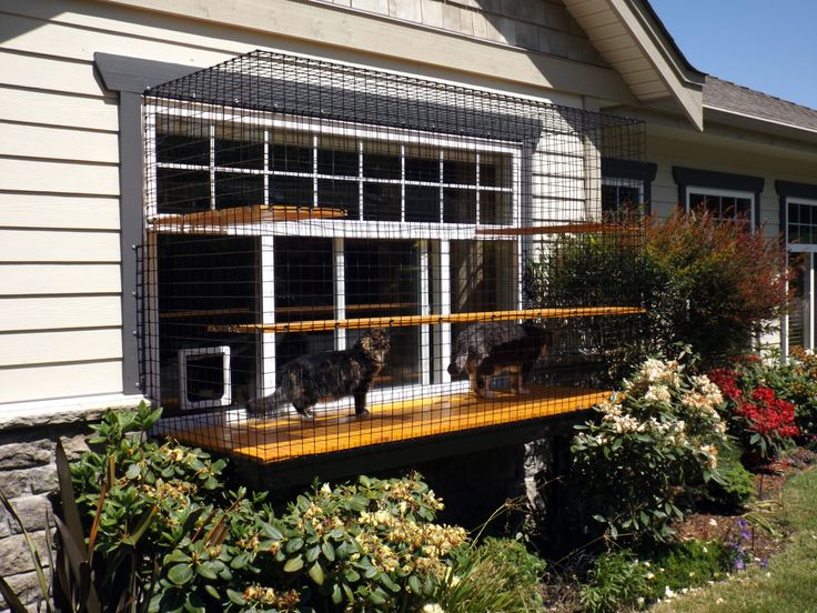screened in porches for cats screened in cat enclosures best outdoor cat enclosure ideas on