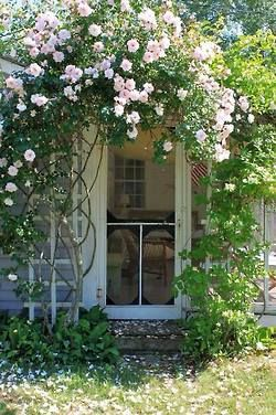 This looks just like the side door at my great aunts farm, except it was wisteria over the door.  I always pretended that i was a princess when I would come in and out.