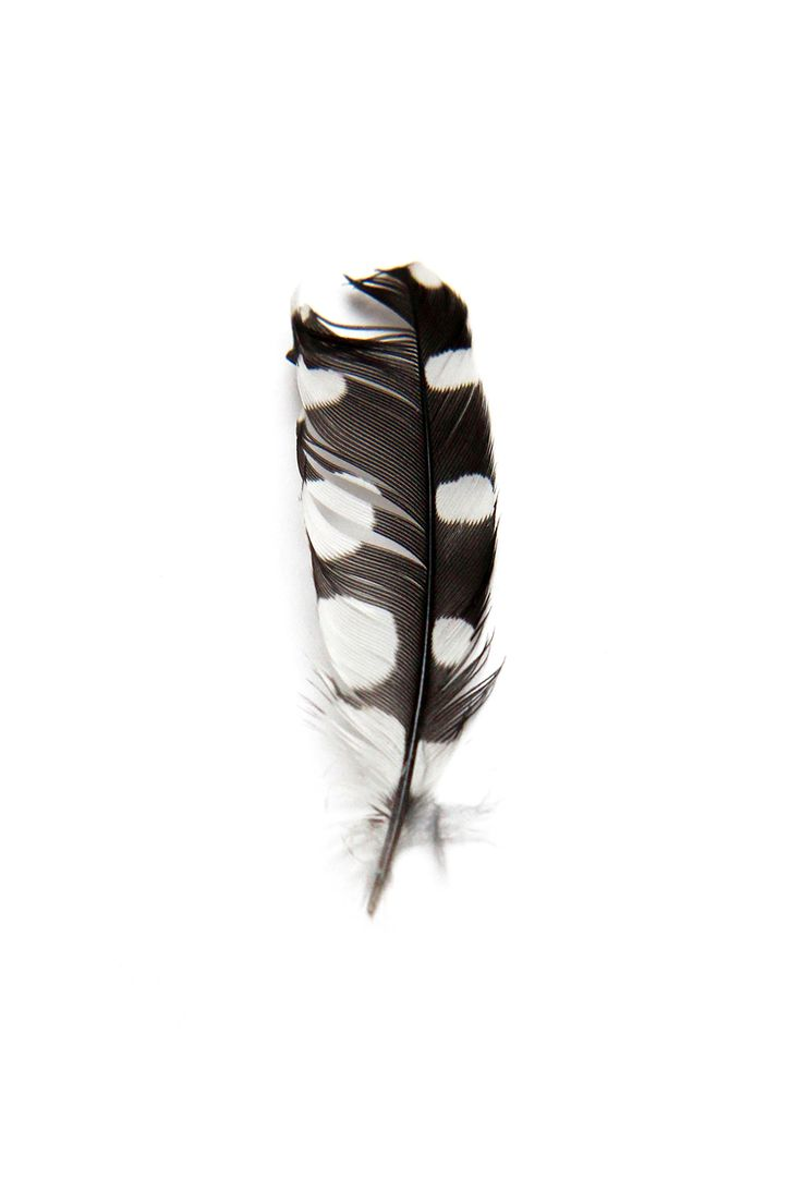 best images about veereinest feathereggnest on pinterest