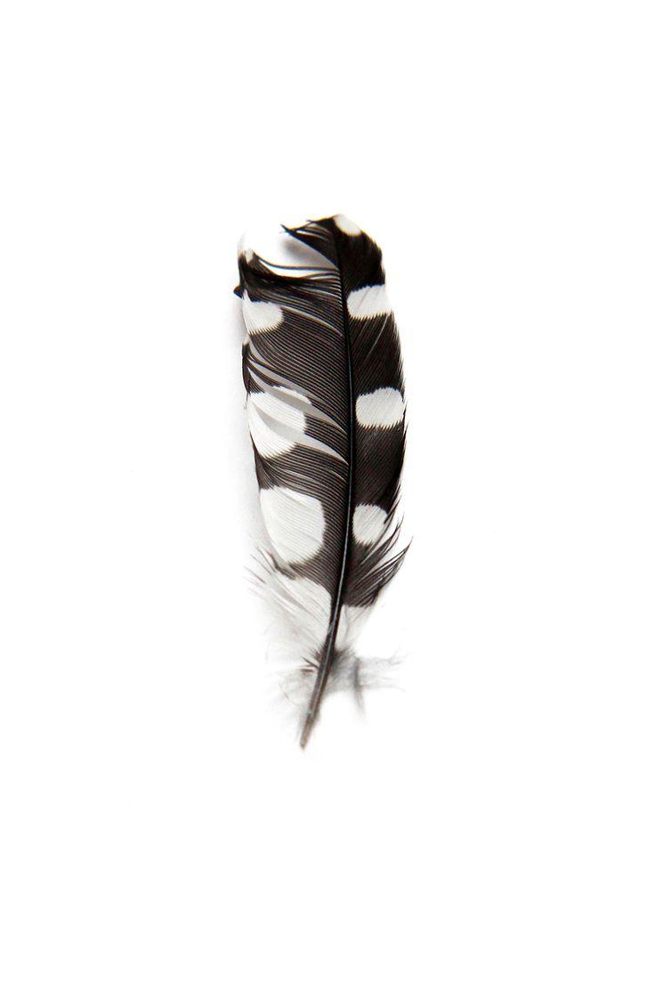 woodpecker feather (mary jo hoffman)