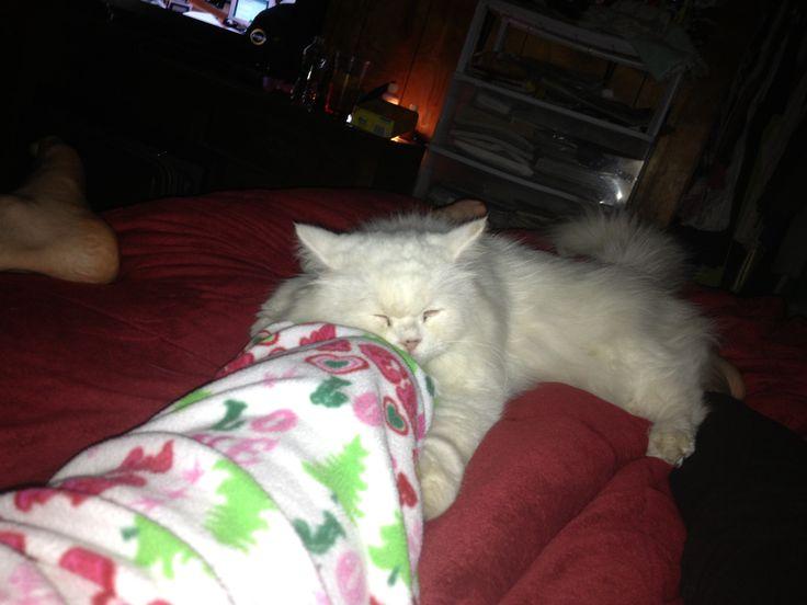 Whitey our kitty
