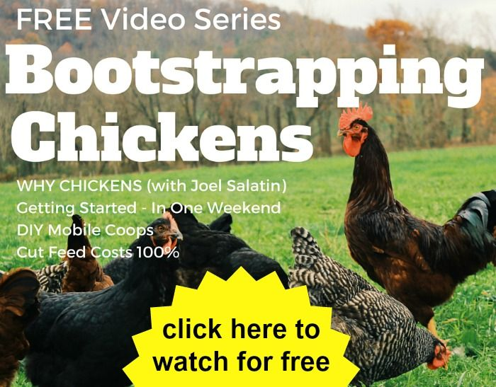 bootstrapping chickens