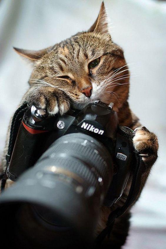 Смешные картинки фотографа с фотоаппаратом, спортсменов