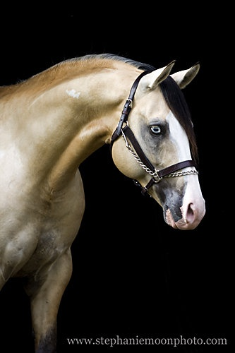 beautiful horse / Hhe looks like a Breyer model!