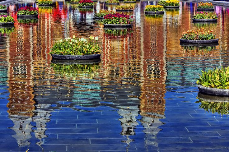 Amsterdam, Rijksmuseum Reflection in a water feature which contained several floating bowls of colorful tulips