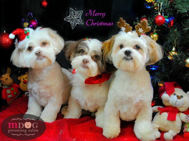 Merry Christmas Tora Rini and Mogwai!!