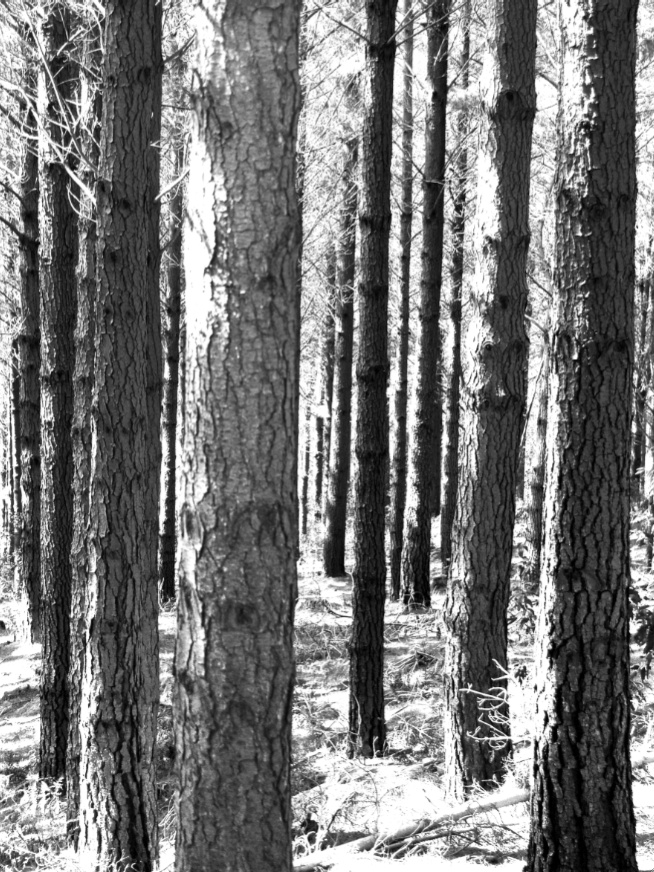 A gorgeous Black and White of the Newlands forest